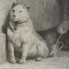 Foto Pavlov's Dog