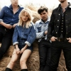 Foto The Common Linnets