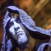 Behemoth foto Eindhoven Metal Meeting 2015 - vrijdag