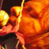 Festivalinfo review: Stars - 06/02 - Melkweg