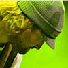 Podiuminfo review: Paaspop Schijndel 2008