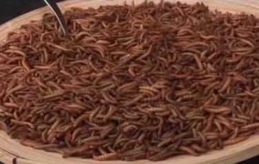 Video: Lowlands-bezoekers zetten tanden in meelworm