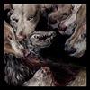 Cover Okkultokrati - Night Jerks