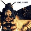 Lonely Kamel Death`s-Head Hawkmoth cover